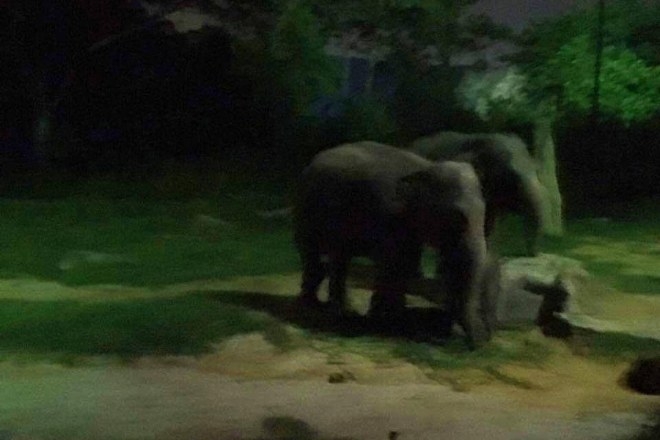 シンガポールナイトサファリの象