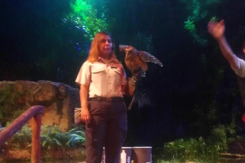 シンガポールナイトサファリのフクロウ