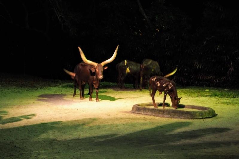 シンガポールナイトサファリ の鹿