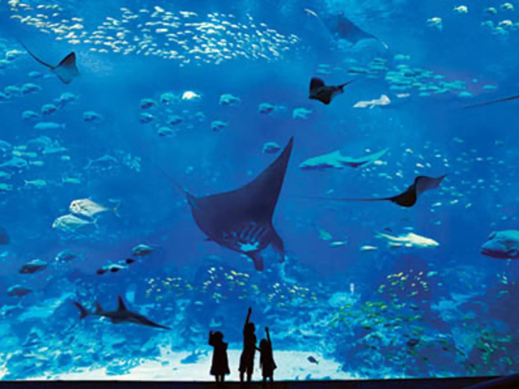シンガポール水族館の大型パネル水槽
