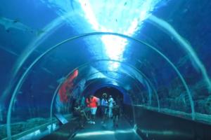シンガポールセントーサ島のシーアクアリウムのシャークトンネル