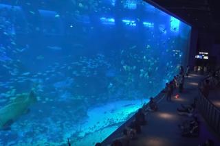 シンガポール水族館「シーアクアリウム」の巨大水槽
