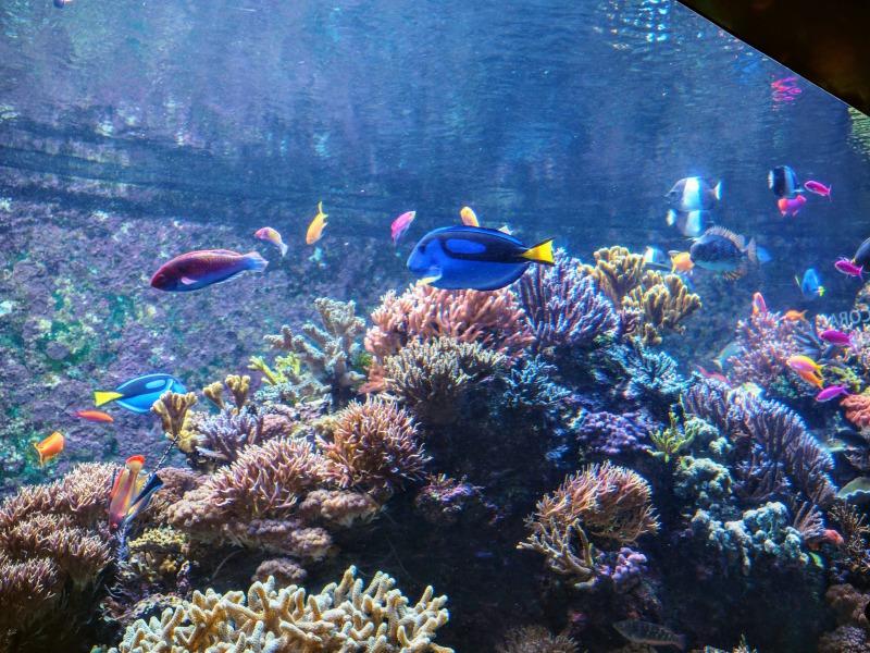 シーアクアリウムのサンゴ礁