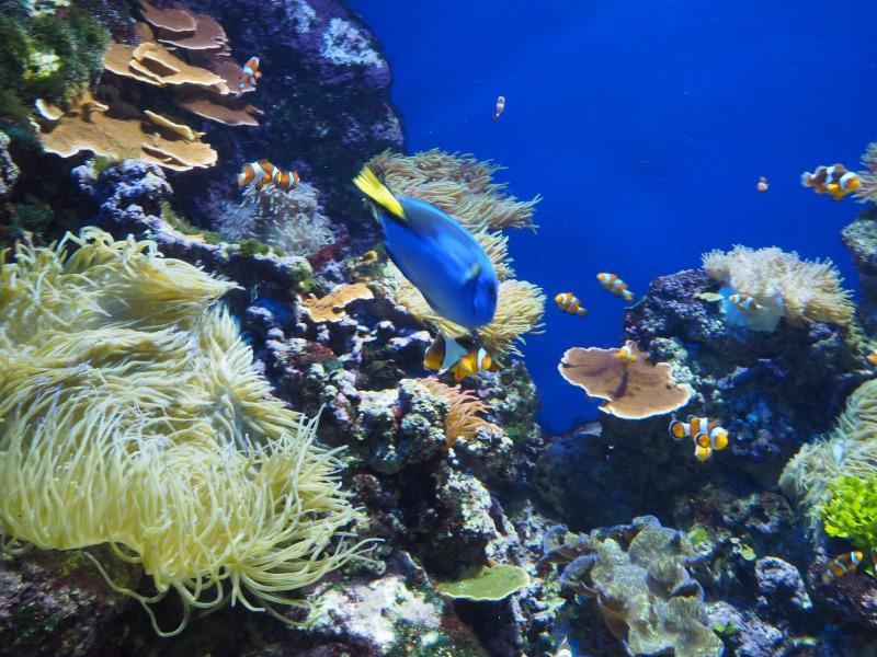 シーアクアリウムの熱帯魚
