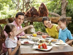 シンガポール動物園 チンパンジーと朝食