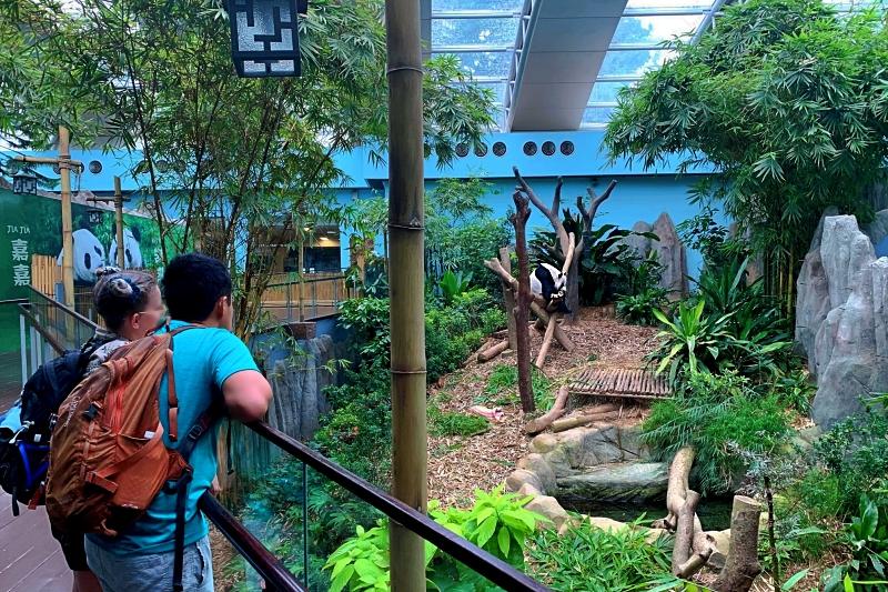 リバーサファリのでパンダを見るカップル