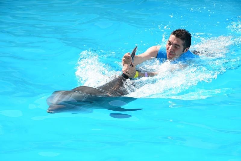 シンガポールのプールでイルカと泳ぐ