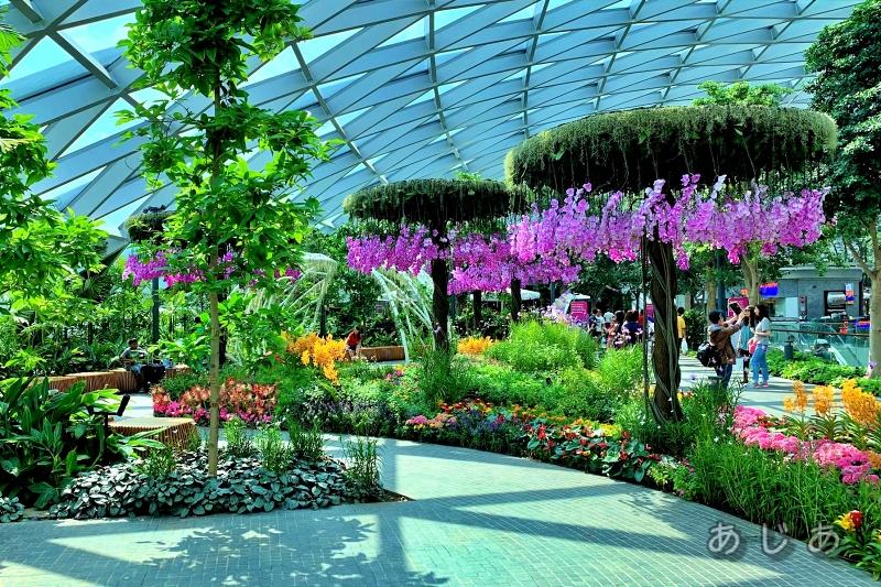 ペタルガーデンの紫の花
